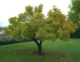 This is what your tree could turn out like in a few years time.
