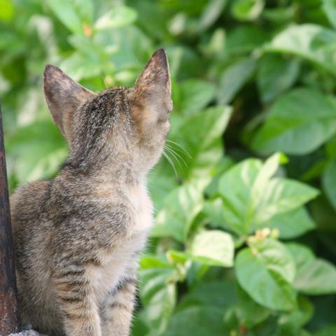 My kitten, BamBam, sitting on her favorite spot in the backyard.