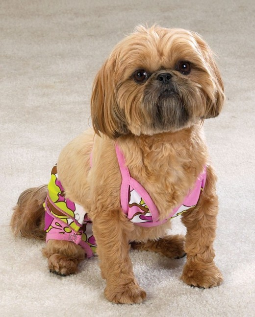 You can even doll up your dog!