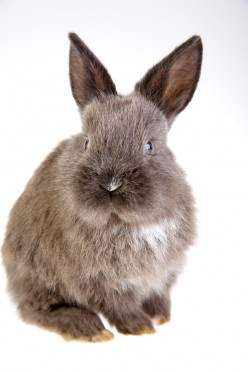 Are You Rabbit Ready? Essential Rabbit Supplies You Will Need to Purchase to Keep Your Hopper Happy!