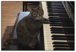 Cat At Play, Piano Cat Plays Online! Lets Start Playing With Nora!