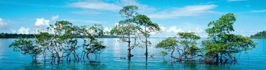 Havelock Island, Andaman and Nicobar
