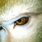 Areydo profile image