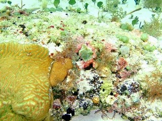 Lovely colored reef in the waters of fortuna beach