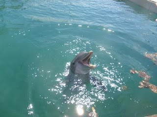 Dolphin at Unexso