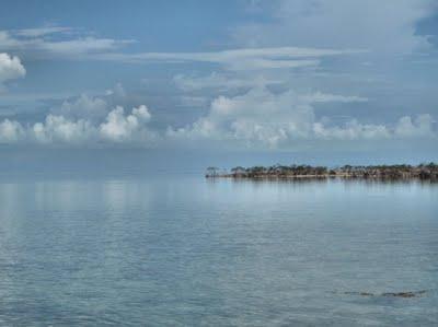 Mangrove islands on EcoVenture tour