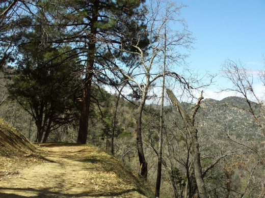 Picture of the trail I am walking on in the San Bernardino Mountains.