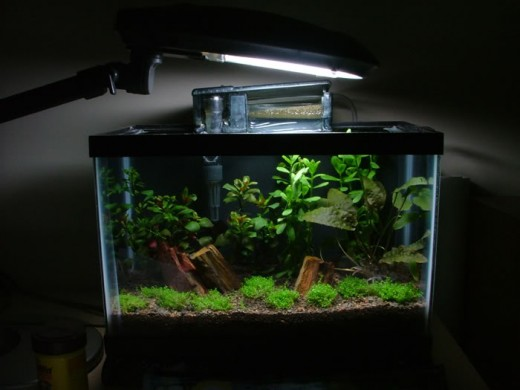 A beautiful planted tank made by http://s205.photobucket.com/home/chadmashman