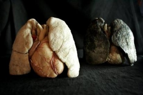 smoking lungs vs healthy lungs. Over time, our lungs become