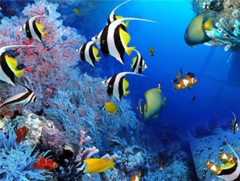 Pics Photos - Tropical Fish Species Upton Park