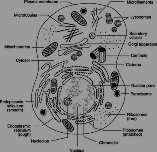 basic information about cell structures