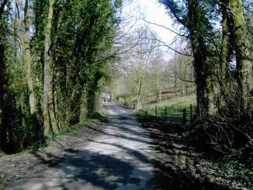 The lane descends quite steeply with a wooded dell on the left. D.A.L.
