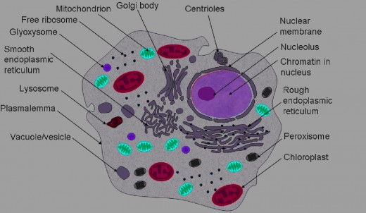 protozoa cell Quotes