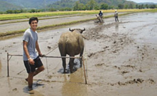 AN EXCHANGE STUDENT IN THE TRADITIONAL WAY OF FARMING  (Photo Credit: http://ezramagazine.cornell.edu/)