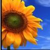 imommy profile image