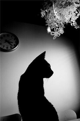 Watchful companion...