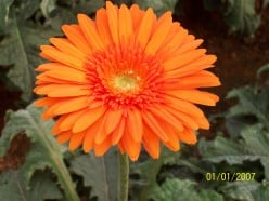 OUR CHILDREN REFRESH OUR LIFE AS THIS FLOWER REFRESHES OUR MIND