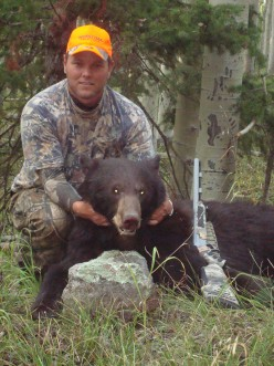 Colorado Black Bear