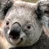 muff0219 profile image