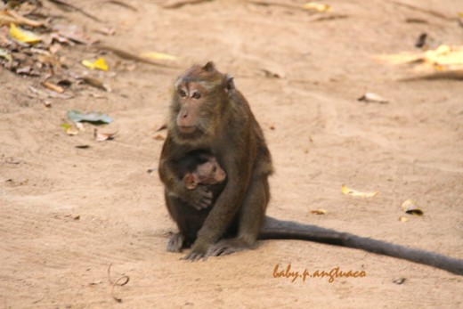 Mother monkey with a baby