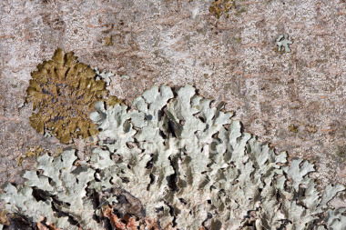 Lichen, which is very hardy in extreme climates is a symbiotic relation between a rock eating fungus and algea.