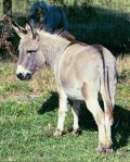 The Donkey Low Down