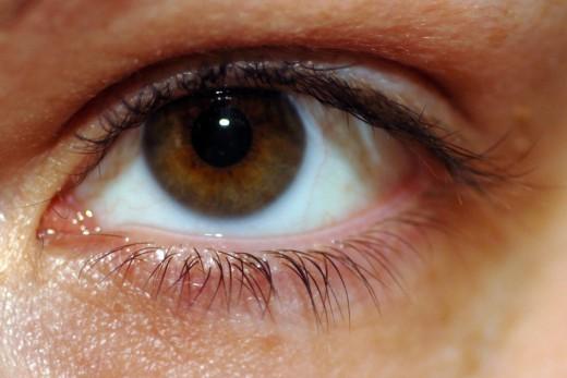 Go Back > Gallery For > Chestnut Brown Eyes