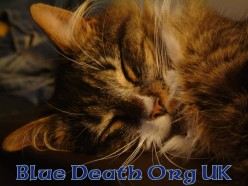 Blue Death Org UK Antfreeze poisoning awareness