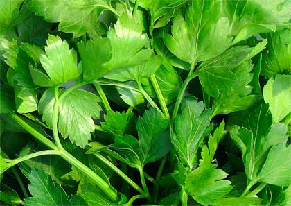 parsley is as parsley does