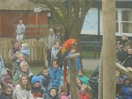Rio the Macaw at Bristol Zoo