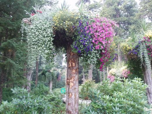 Not her garden, but it looks like her garden, believe me