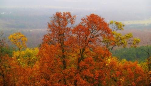Seasons along Talimena Drive: Autumn Brings a Vibrant Display of Colors - a Kaleidoscope of Crimson, Violet, and Auburn