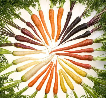 Color variety of carrots