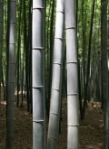 What are the Benefits of Bamboo