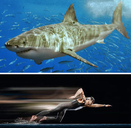 White shark from Wikimedia Commons and Phelps in Fastskin origin unknown (whoops, sorry!)