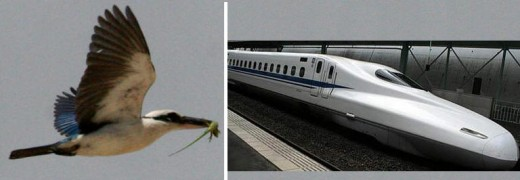 Kingfisher from Wikimedia Commons and Shinkansen Bullet Train from Filmage Public Domain