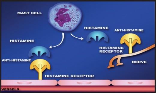Loratadine Side Effects