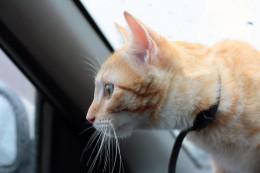 Keep your pet safe with pet collars.