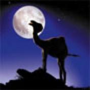 qatarvisitor profile image