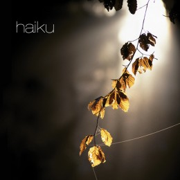 an ambient album that takes you on an inner journey through lights and landscapes The music communicates various feelings and is much inspired by nature and own experiences. http://iacmusic.com