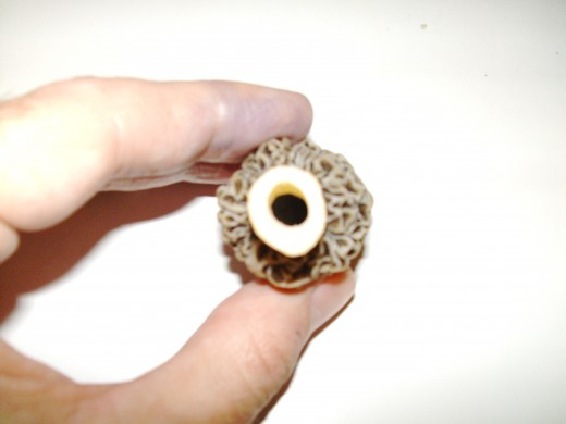 The stalk is hollow. So is the cap. If you cut the top off, you can look through a morel.