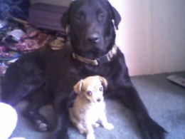 Yager and Baby Jazz.
