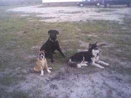 Yager, Baby McKenzie, and Nitro.