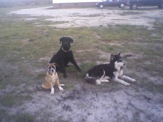 Yager, Baby McKenzie, and Nitro.