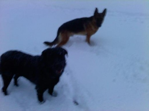 Yager and Gunner in the snow.