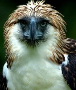Meet the Philippine Wildlife World Record Holders