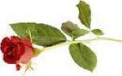 A Rose for Kanaka