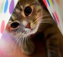 cats.picturesarehere.com
