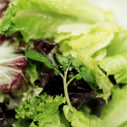 Baby lettuce tastes best when grown fast!