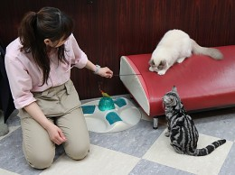 What is the best job in the world? Being the Nekobukuro Cat's House keeper of course!